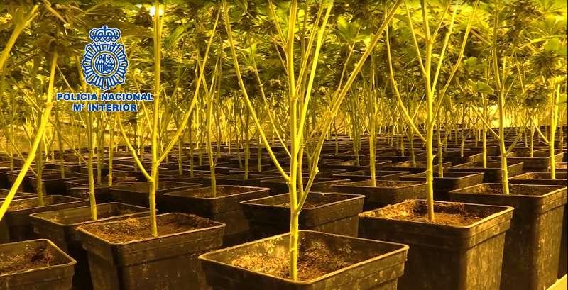 Imagen de una plantación indoor de marihuana. EPDA