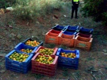 Naranjas recuperadas. FOTO: PL PUÇOL