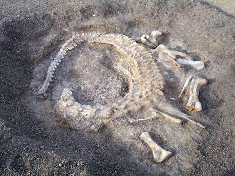 Detalle de los restos del dinosaurio