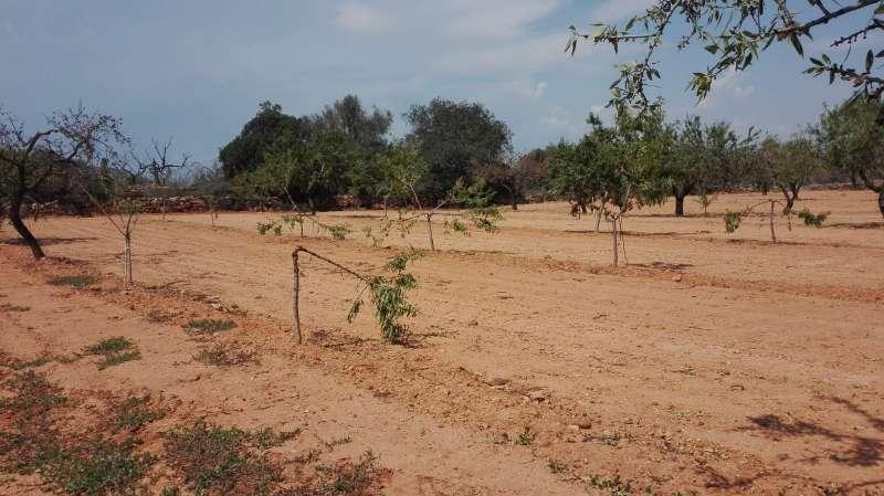 Daños realizados por un jabalí en un campo. / EPDA