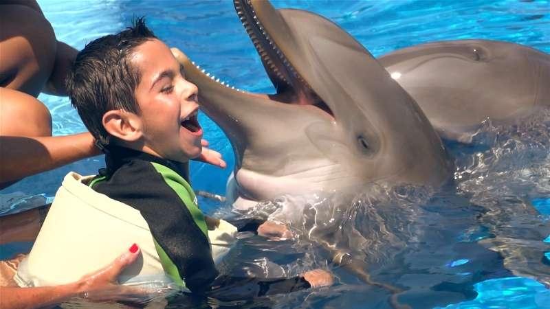 Terapia con delfines. EPDA