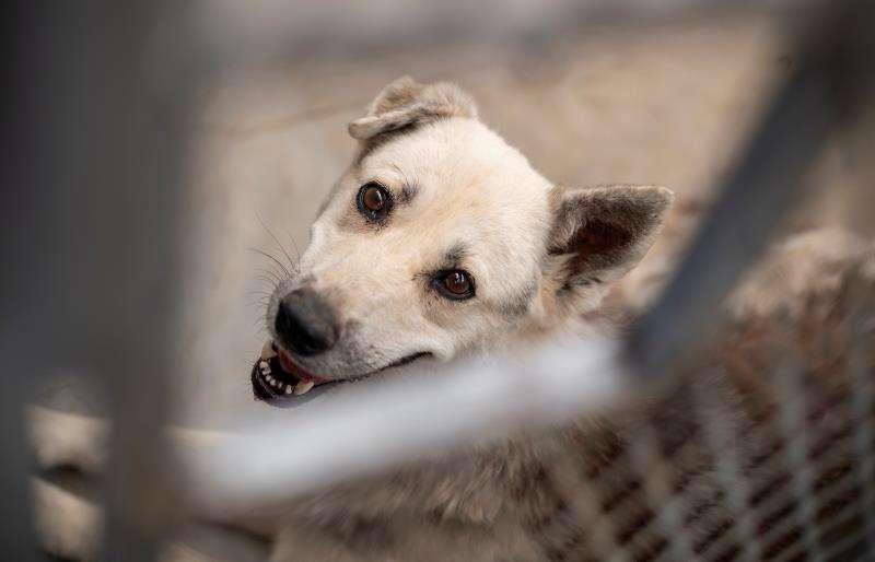 Animal de una perrera. EFE/Archivo