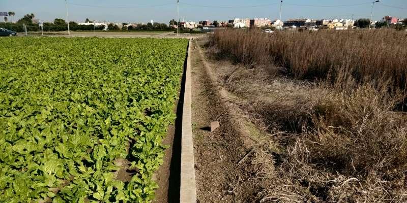 Campos en Valencia. EPDA