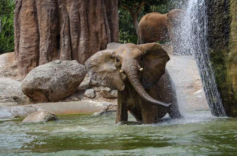 Bioparc Valencia celebra el dia mundial del elefante. EPDA