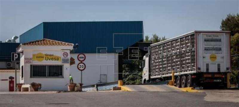 Un camión con gallinas a la entrada principal de la empresa cárnica Grupo Uvesa de Rafelbuñol (València). EFE