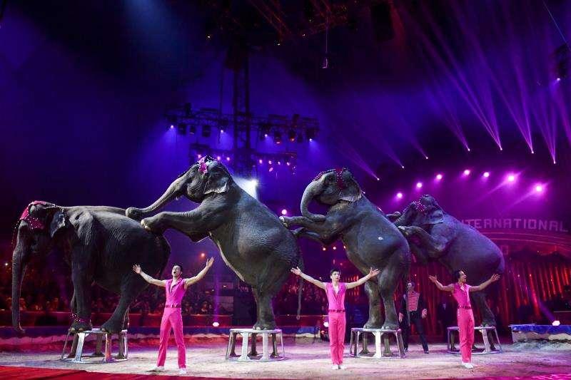 Actuación de unos domadores de elefantes en un circo. EFE/Archivo