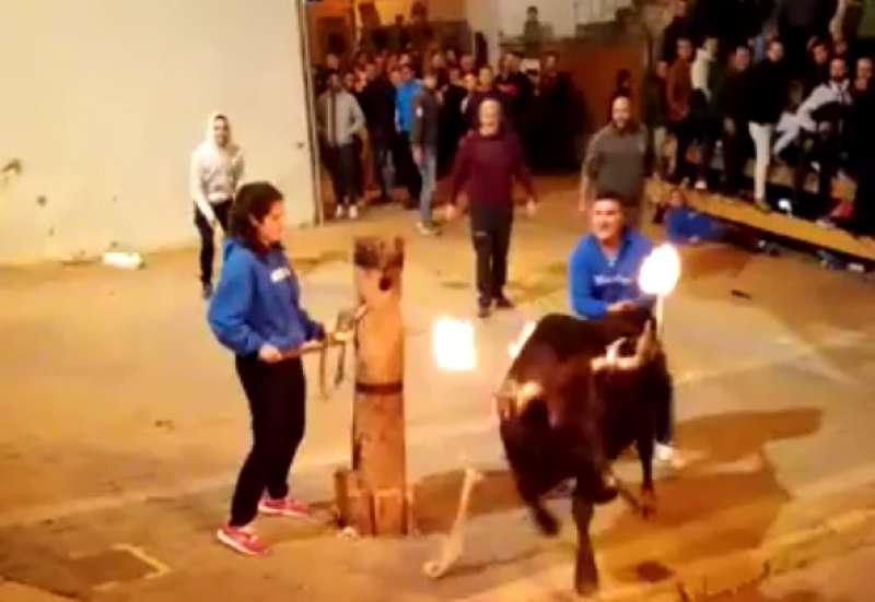 El toro saliendo del palo ante la mirada de Nerea