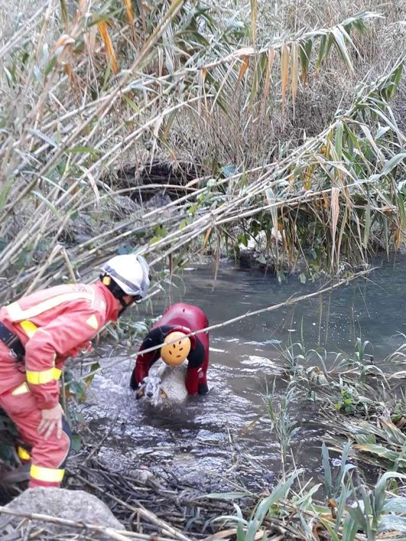 La oveja es rescatada por dos bomberos. EFE/Consorcio de Bomberos de Valencia