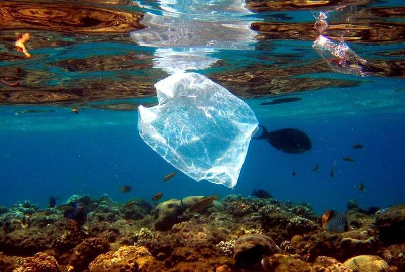 Peces nadan alrededor de una bolsa de plástico.EFE/Archivo/Mike Nelson