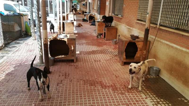 Ciudadanos denuncia que la rotura de tuberías deja sin agua a dos áreas del núcleo zoológico de Benimamet