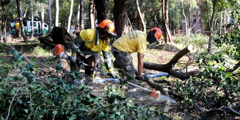 Una brigada forestal realizando trabajos de limpieza