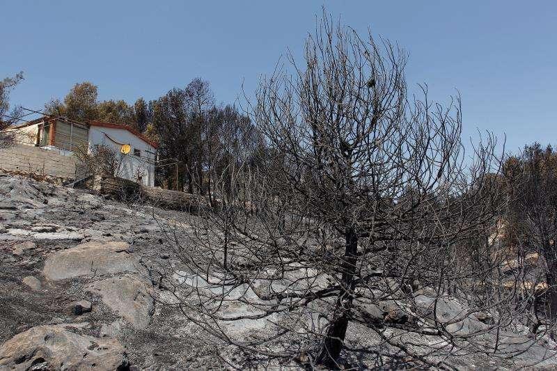 Imagen de la zona afectada por el incendio de Beneixama (Alicante). EFE/Archivo