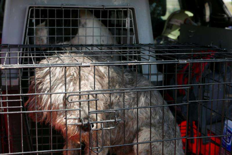 Imagen de archivo de un perro dentro de una jaula. EFE/Archivo