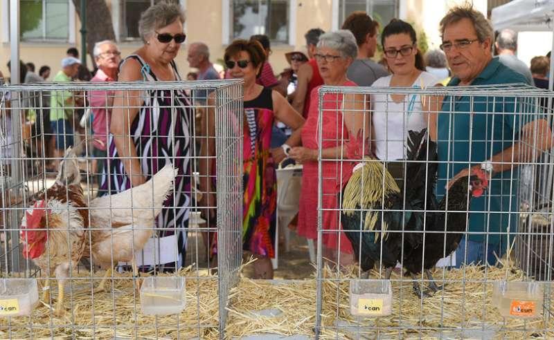 Las gallinas tendrá su espacio principal en la feria