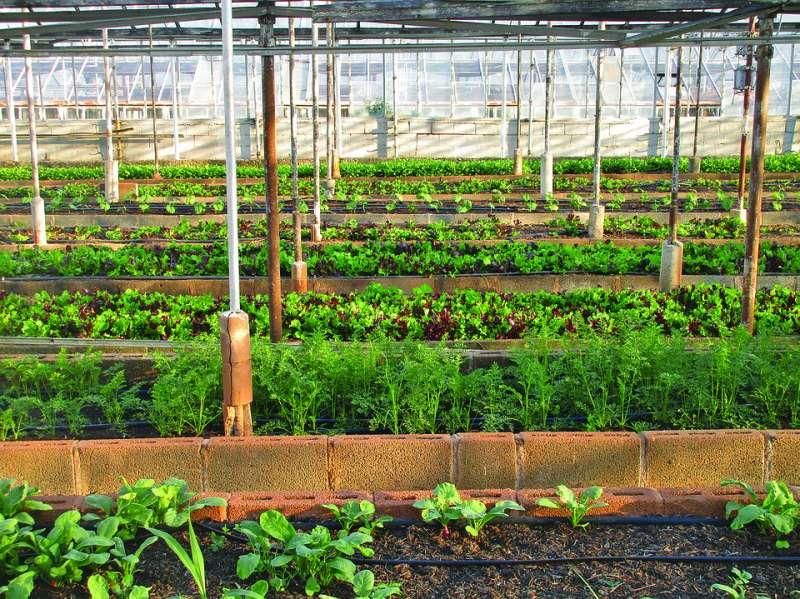 Plantación agrícola