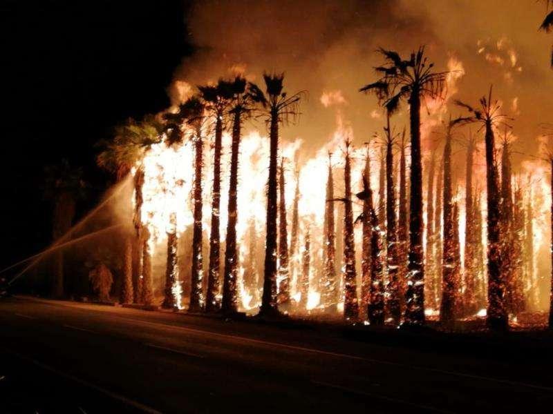 Imagen de uno de los incendios de palmeras en Elche. EFE/Consorcio Bomberos Alicante