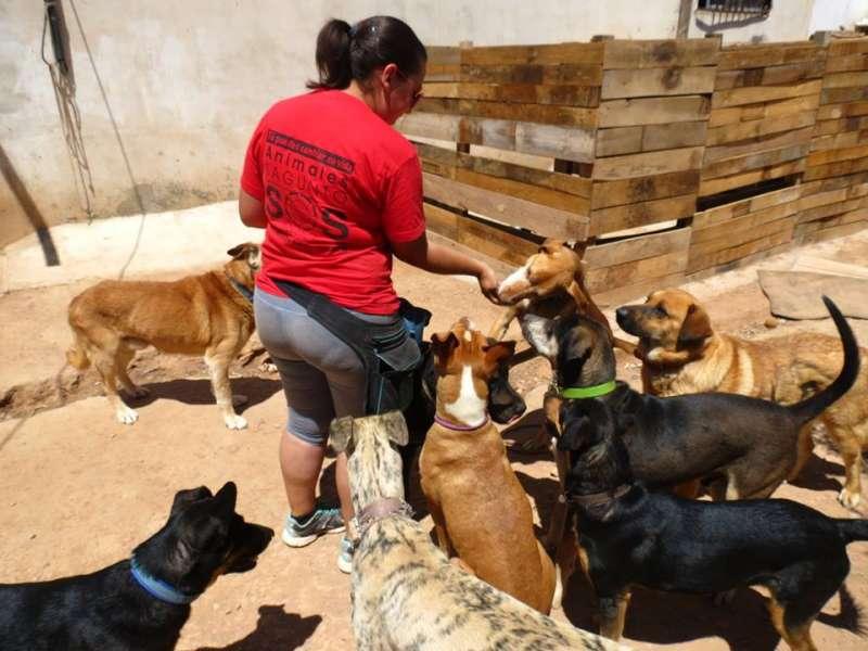 Una voluntaria de SOS Animales Sagunto. EPDA
