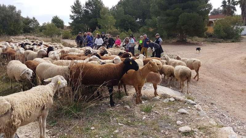 Vecinos de Llíria participan en una marcha trashumante por la Vereda Real de Bétera