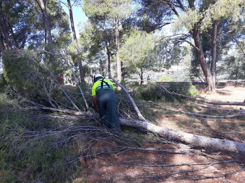 Eliminación de los pinos que interfieren en las obras
