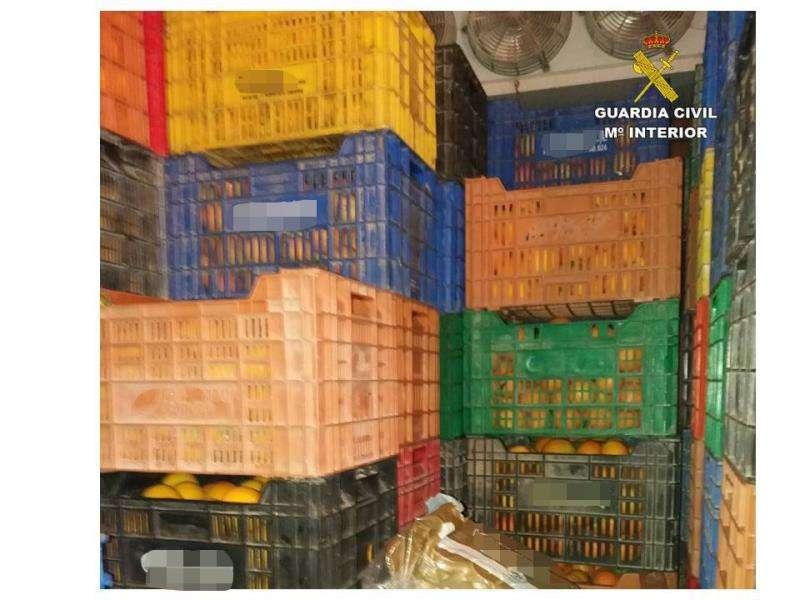 Una imagen de las naranjas robadas, facilitada por la Guardia Civil. EFE