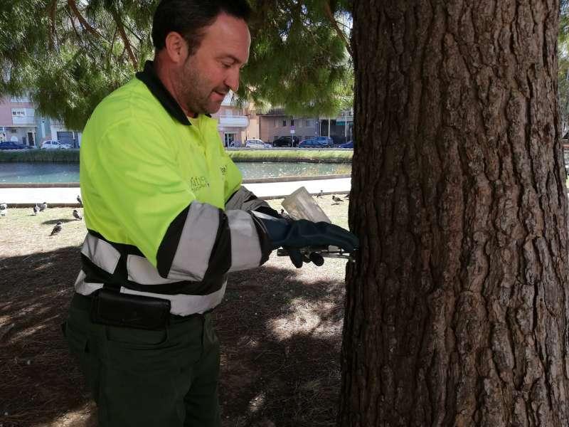 Imagen de archivo de un trabajador municipal de Peñíscola para el control de las plagas en pinos.