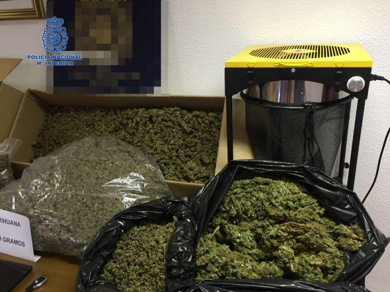 Cogollos de marihuana preparados para su venta