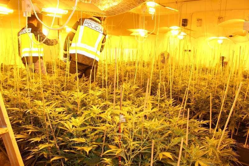 Una plantación de marihuana en interior. Imagen de archivo.