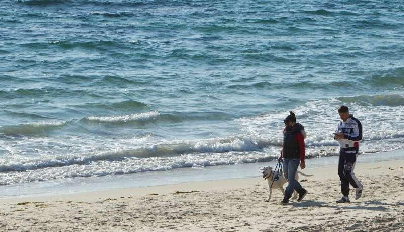 Una pareja pasea a un perro en una playa espa�ola. EFE/Salvador Sas/Archivo
