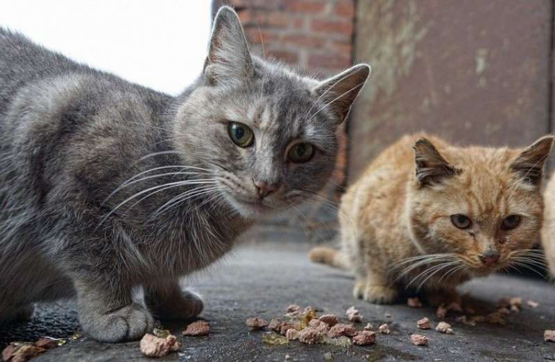 Gatos. EPDA.