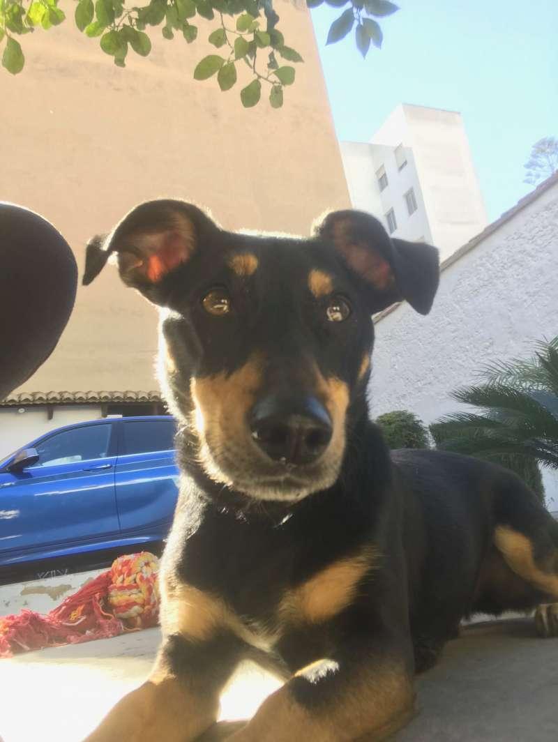 Gustavsson, adoptado por una familia valenciana. Cuatro años. Mezcla de Pinscher-Teckel