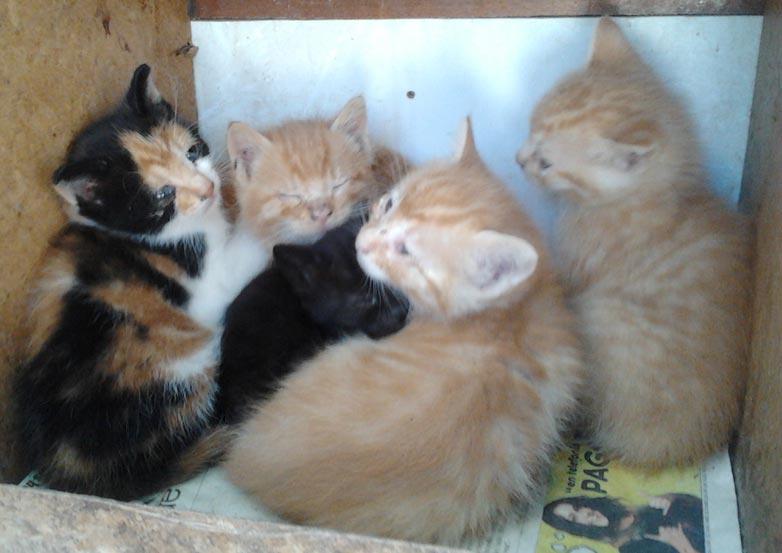 La protectora de animales de moncada adam tiene varios - Gatitos de un mes ...
