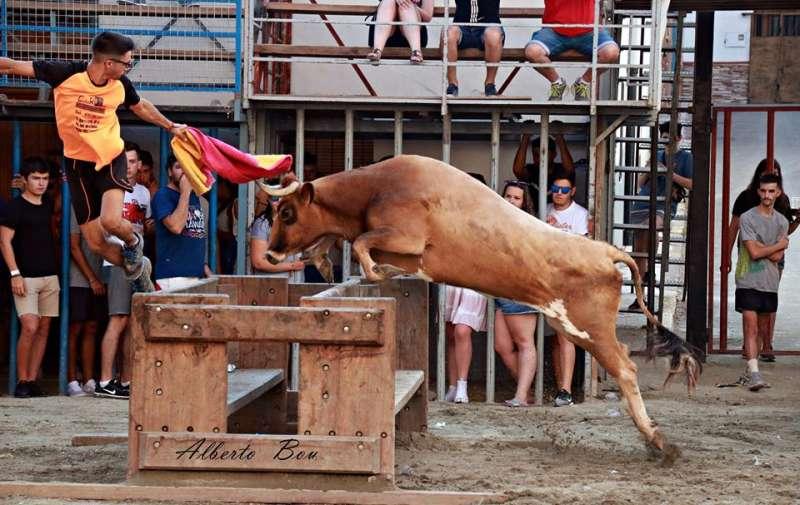 Vaca de Miguel Parejo fotografiada por Alberto Bou