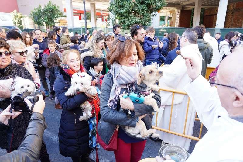 Miles de personas acuden con sus mascotas a la celebración