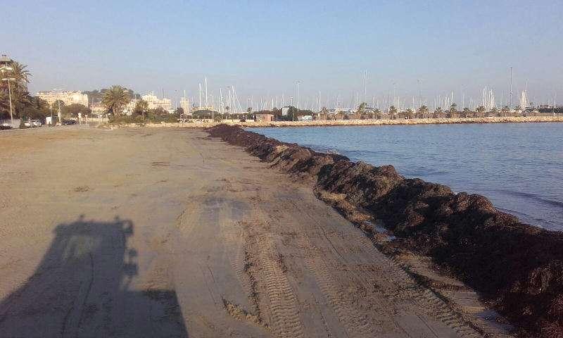 Barreras de posidonia en la playa de la Marineta Cassiana de Dénia. EPDA
