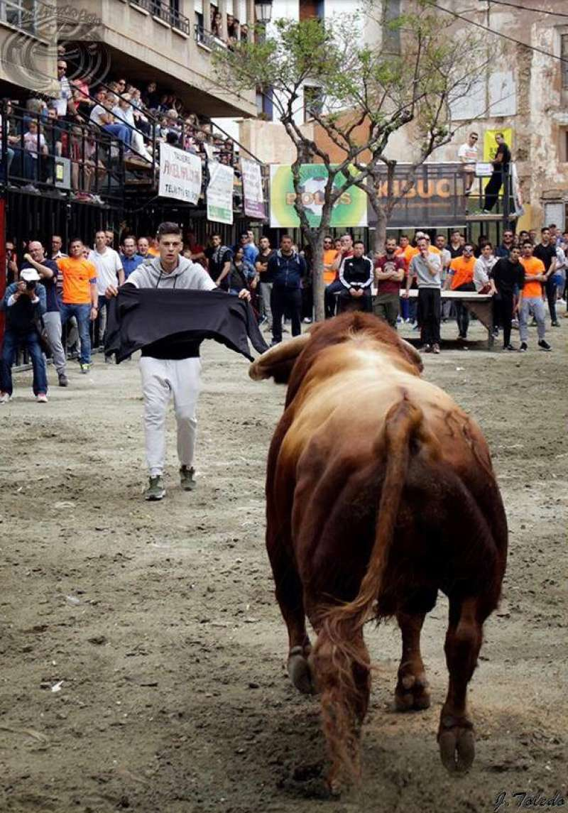 Volverán los toros a la plaza del Almudín