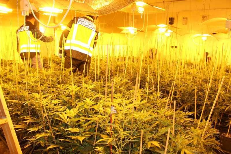 Imagen de archivo de una plantación de marihuana. EPDA