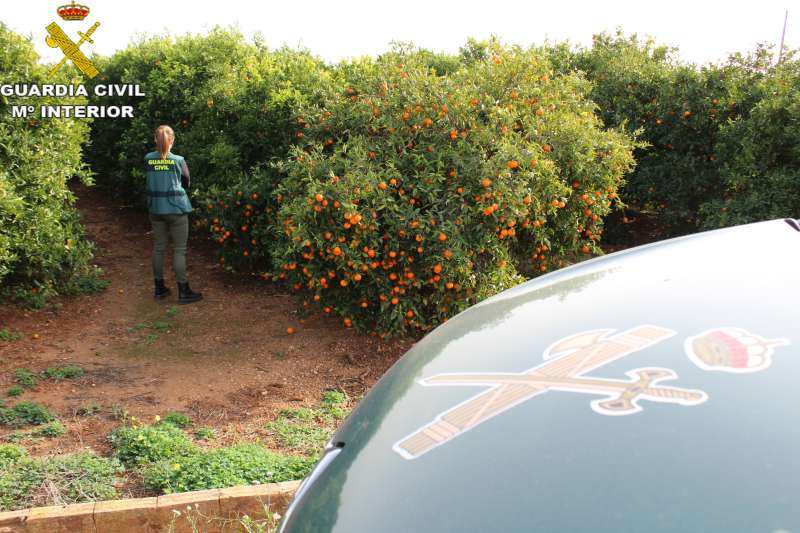 Campo de Naranjos. Foto de la Guardia Civil.