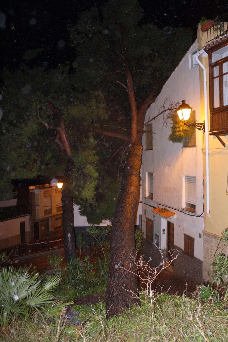 El pino caído sobre el edificio