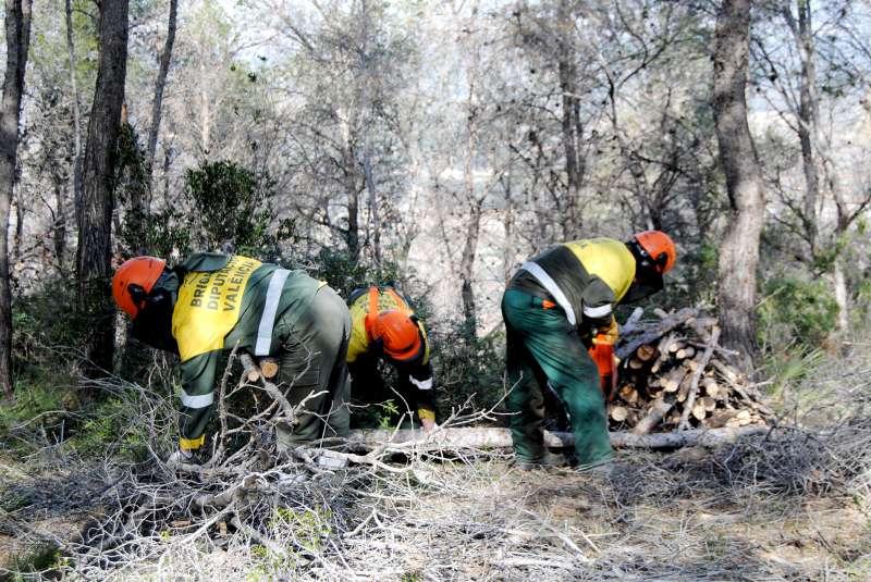Brigadas forestales en trabajos de prevención