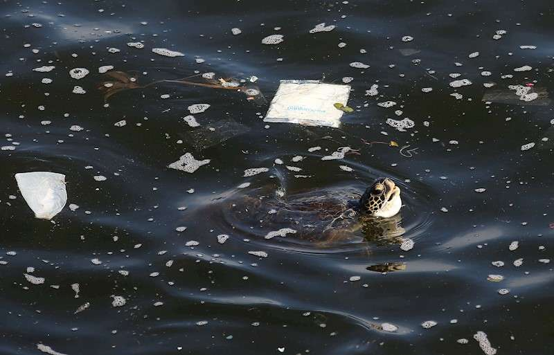 Una tortuga nada en un mar lleno de plásticos. EFE/Archivo
