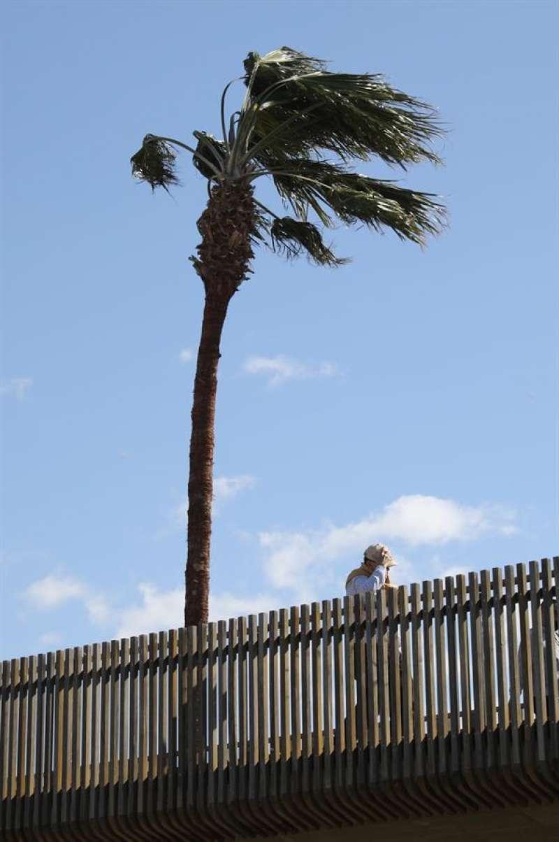 Palmera azotada por el viento, en este comienzo de semana en València. EFE/Ana Escobar