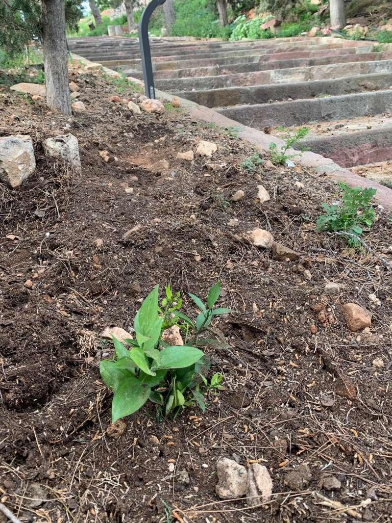 Plantes autòctones a Benifairó. EPDA