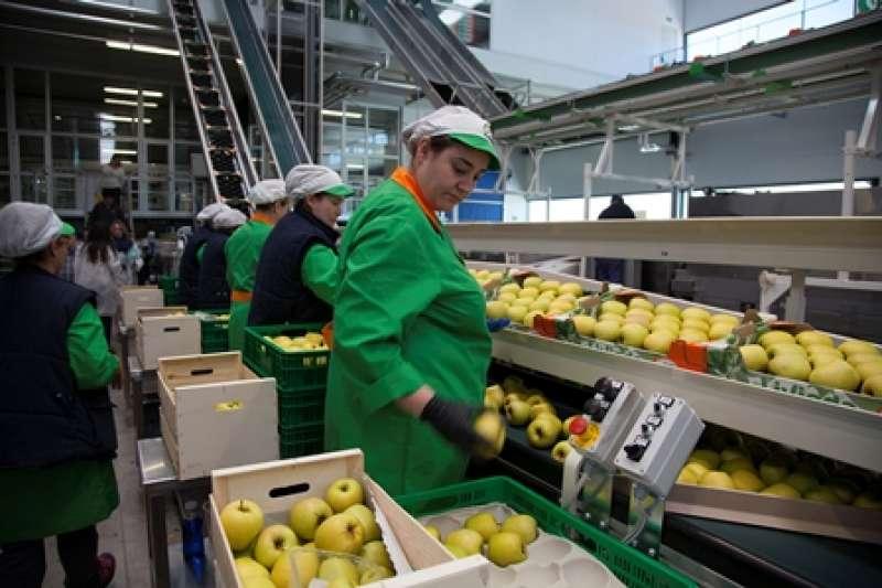 Trabajadoras en un almacén de frutas. EPDA