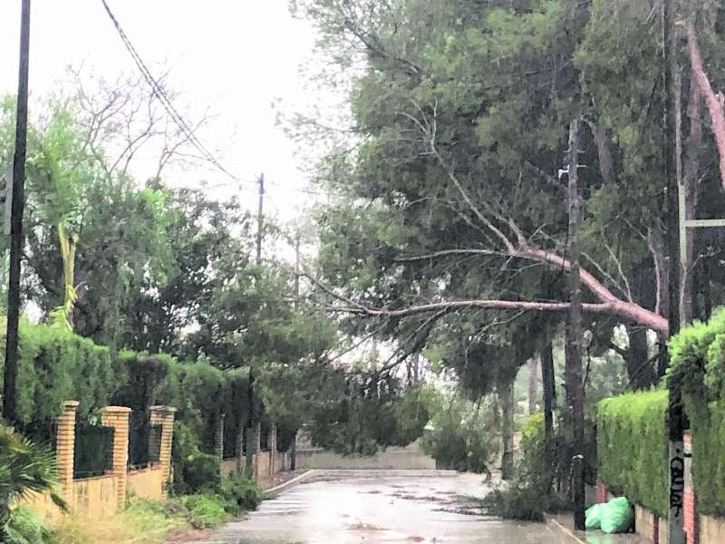 Árboles y ramas caídas en Olocau. / EPDA