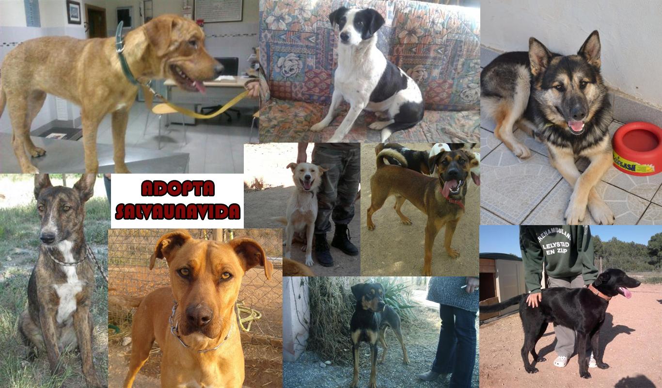 Los perros de Adoptasalvaunavida (EPDA)