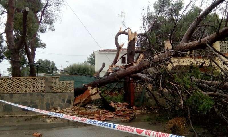 Un árbol caído como consecuencia de uno de los últimos temporales de la Comunitat. //EPDA