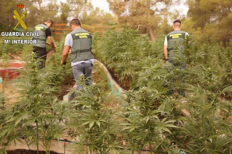 Imagen de archivo de una plantación de marihuana cedida por la Guardia Civil. EFE/Guardia Civil