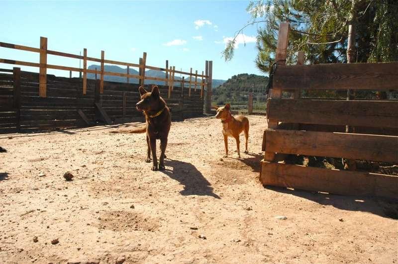 Dos perros en el refugio de SOS Sagunto en Estivella. EPDA