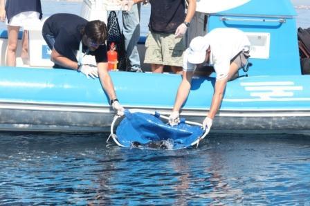 Técnicos del Oceanogràfic soltando tres peces rayas en alta mar. Foto: EPDA.