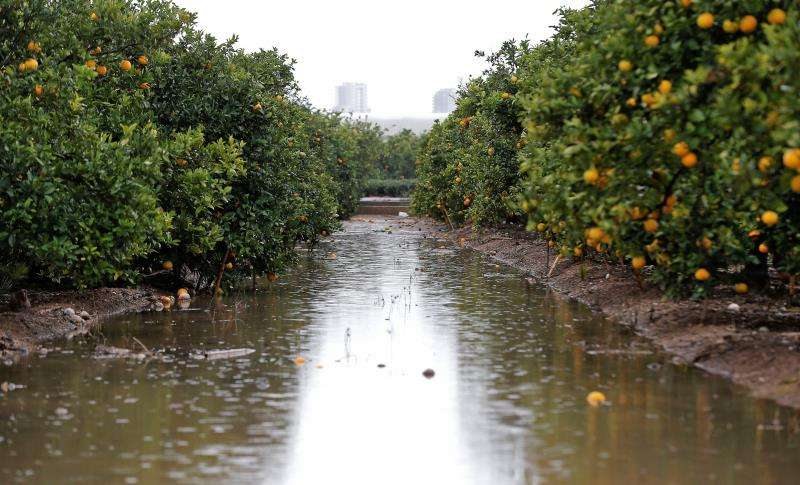 Imagen de un campo anegado por las lluvias. EFE/Archivo
